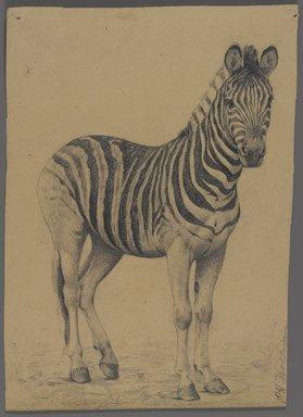 Philip H. Wolfrom (American, 1870-1904). <em>Zebra</em>, n.d. Graphite on paper, Sheet: 9 1/2 x 7 3/4 in. (24.1 x 19.7 cm). Brooklyn Museum, Gift of Anna Wolfrom Dove, 27.852 (Photo: Brooklyn Museum, 27.852_PS4.jpg)