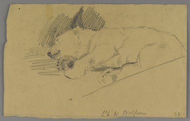 Philip H. Wolfrom (American, 1870-1904). <em>Sleeping Polar Bear</em>, n.d. Graphite on paper, Sheet: 6 1/8 x 9 7/8 in. (15.6 x 25.1 cm). Brooklyn Museum, Gift of Anna Wolfrom Dove, 27.853 (Photo: Brooklyn Museum, 27.853_PS6.jpg)