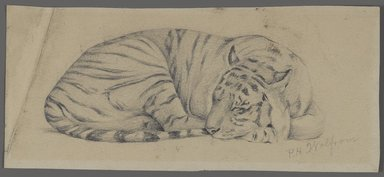 Philip H. Wolfrom (American, 1870-1904). <em>Sleeping Tiger</em>, n.d. Graphite on paper, Sheet: 3 9/16 x 8 in. (9 x 20.3 cm). Brooklyn Museum, Gift of Anna Wolfrom Dove, 27.856 (Photo: Brooklyn Museum, 27.856_PS4.jpg)