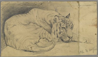 Philip H. Wolfrom (American, 1870-1904). <em>Sleeping Tiger</em>, n.d. Graphite on paper, Sheet: 3 7/8 x 6 3/4 in. (9.8 x 17.1 cm). Brooklyn Museum, Gift of Anna Wolfrom Dove, 27.857 (Photo: Brooklyn Museum, 27.857_PS6.jpg)