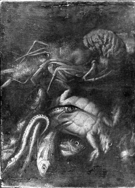 Unknown Dutch. <em>Still Life - Lobster, Turtle, Fish and Eels</em>, 17th century. Painting on canvas, 26 x 18 3/4 in.  (66.0 x 47.6 cm). Brooklyn Museum, Gift of Mrs. Henry Wolf, Austin M. Wolf, and Hamilton A. Wolf, 33.37 (Photo: Brooklyn Museum, 33.37_acetate_bw.jpg)