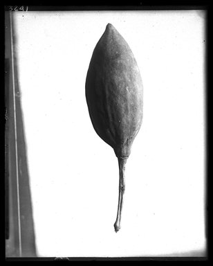 <em>Gourd</em>. Organic material, Diam. 3 1/8 x 11 5/8 in. (7.9 x 29.5 cm). Brooklyn Museum, Charles Edwin Wilbour Fund, 37.2042.27E. Creative Commons-BY (Photo: Brooklyn Museum, 37.2042.27E_NegA_SL4.jpg)