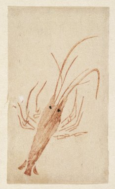 <em>Egoyomi (Lobster)</em>, 1780-1785. Color woodblock print on paper, sheet: 5 5/16 x 3 1/16 in. (13.5 x 7.7 cm). Brooklyn Museum, By exchange, 37.442 (Photo: Brooklyn Museum, 37.442_IMLS_SL2.jpg)