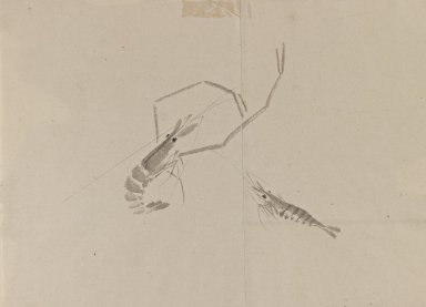 <em>Drawing of Two Crayfish</em>, 18th-19th century. Ink on paper, 9 13/16 x 13 3/4 in. (25 x 35 cm). Brooklyn Museum, By exchange, 39.356 (Photo: Brooklyn Museum, 39.356_IMLS_PS3.jpg)