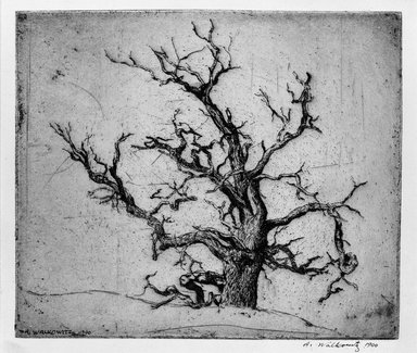 Abraham Walkowitz (American, born Russia, 1878-1965). <em>Tree</em>, 1900. Etching Brooklyn Museum, Gift of the artist, 39.474 (Photo: Brooklyn Museum, 39.474_bw.jpg)