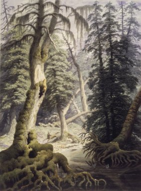 George Harvey (American, 1801-1878). <em>A Cedar Swamp</em>. Watercolor Brooklyn Museum, Dick S. Ramsay Fund, 46.51 (Photo: Brooklyn Museum, 46.51.jpg)