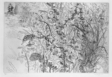 Anthony Gross (British, 1905-1984). <em>Tangled Underwood</em>, 1950. Etching on laid paper, 10 1/16 x 14 13/16 in. (25.5 x 37.7 cm). Brooklyn Museum, Henry L. Batterman Fund, 54.139.2. © artist or artist's estate (Photo: Brooklyn Museum, 54.139.2_bw.jpg)