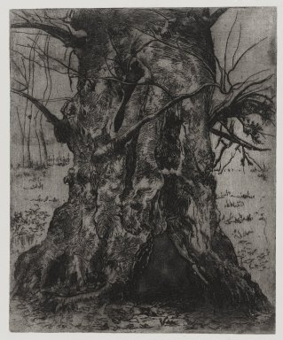 Joseph Stella (American, born Italy, 1877-1946). <em>Tree Trunk</em>, 1957. Etching Brooklyn Museum, Gift of Nathan Krueger, 57.126.1 (Photo: Brooklyn Museum, 57.126.1_PS4.jpg)