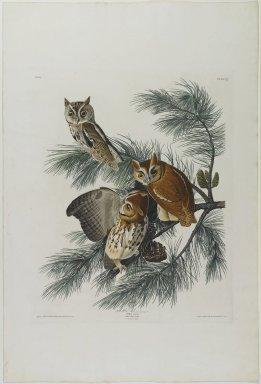 John James  Audubon (American, born Haiti, 1785-1851). <em>Mottled Owl</em>. Aquatint, approx.: 27 x 40 in. (68.6 x 101.6 cm). Brooklyn Museum, Gift of the Estate of Emily Winthrop Miles, 64.98.13 (Photo: Brooklyn Museum, 64.98.13_PS1.jpg)