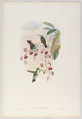John Gould (British, 1804-1881). <em>Thaumatias Milleri: Miller's Emerald</em>. Lithograph in color on wove paper, 21 1/2 x 14 3/8 in. (54.6 x 36.5 cm). Brooklyn Museum, Gift of the Estate of Emily Winthrop Miles, 64.98.241 (Photo: Brooklyn Museum, 64.98.241_PS9.jpg)