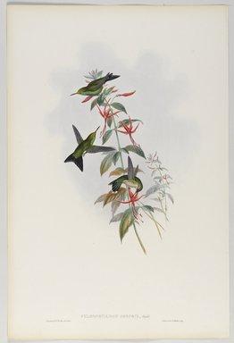 John Gould (British, 1804-1881). <em>Chlorostilbon Osberti: Osbert's Emerald</em>. Lithograph in color on wove paper, 21 1/2 x 14 3/8 in. (54.6 x 36.5 cm). Brooklyn Museum, Gift of the Estate of Emily Winthrop Miles, 64.98.249 (Photo: Brooklyn Museum, 64.98.249_PS9.jpg)