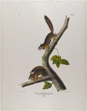 John James  Audubon (American, born Haiti, 1785-1851). <em>Columbian Squirrel</em>. Lithograph, 28 x 21 7/8 in. (71.1 x 55.6 cm). Brooklyn Museum, Gift of the Estate of Emily Winthrop Miles, 64.98.24 (Photo: Brooklyn Museum, 64.98.24_IMLS_PS4.jpg)