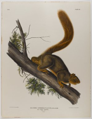 John James  Audubon (American, born Haiti, 1785-1851). <em>Brown or Norway Rat, Red-Tailed Squirrel</em>. Lithograph, 27 x 21 in. (68.6 x 53.3 cm). Brooklyn Museum, Gift of the Estate of Emily Winthrop Miles, 64.98.44 (Photo: Brooklyn Museum, 64.98.44_IMLS_PS4.jpg)