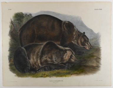 John James  Audubon (American, born Haiti, 1785-1851). <em>Grizzley Bear</em>. Lithograph, 21 x 27 in. (53.3 x 68.6 cm). Brooklyn Museum, Gift of the Estate of Emily Winthrop Miles, 64.98.67 (Photo: Brooklyn Museum, 64.98.67_IMLS_PS4.jpg)
