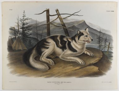 John James  Audubon (American, born Haiti, 1785-1851). <em>Hare Indian Dog</em>. Lithograph, 21 x 27 in. (53.3 x 68.6 cm). Brooklyn Museum, Gift of the Estate of Emily Winthrop Miles, 64.98.68 (Photo: Brooklyn Museum, 64.98.68_IMLS_PS4.jpg)