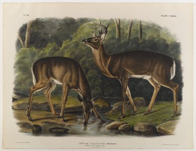 John James  Audubon (American, born Haiti, 1785-1851). <em>Common or Virginian Deer</em>. Lithograph, 21 x 27 in. (53.3 x 68.6 cm). Brooklyn Museum, Gift of the Estate of Emily Winthrop Miles, 64.98.69 (Photo: Brooklyn Museum, 64.98.69_IMLS_PS4.jpg)