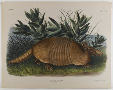 John James  Audubon (American, born Haiti, 1785-1851). <em>Armadillo</em>. Lithograph, 21 x 27 in. (53.3 x 68.6 cm). Brooklyn Museum, Gift of the Estate of Emily Winthrop Miles, 64.98.73 (Photo: Brooklyn Museum, 64.98.73_IMLS_PS4.jpg)