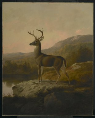 Thomas Hewes Hinckley (American, 1813-1896). <em>Deer</em>, 1855. Oil on canvas, 36 1/8 x 28 15/16 in. (91.8 x 73.5 cm). Brooklyn Museum, Dick S. Ramsay Fund, 68.95 (Photo: Brooklyn Museum, 68.95_PS2.jpg)