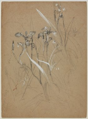 William Trost Richards (American, 1833-1905). <em>Plant Study</em>, June 30, 1859. Graphite and Chinese white on tan paper, Sheet: 7 9/16 x 5 9/16 in. (19.2 x 14.1 cm). Brooklyn Museum, Gift of Edith Ballinger Price, 72.32.10 (Photo: , 72.32.10_PS9.jpg)