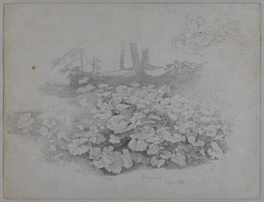 William Trost Richards (American, 1833-1905). <em>Plant Study</em>, September 11, 1867. Graphite on blueish wove paper, sheet: 9 3/8 × 12 15/16 in. (23.8 × 32.9 cm). Brooklyn Museum, Gift of Edith Ballinger Price, 72.32.21 (Photo: , 72.32.21_PS9.jpg)