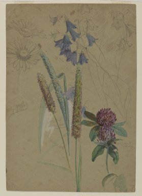 William Trost Richards (American, 1833-1905). <em>Flower Study</em>, July 9-14, 1860. Opaque watercolor and graphite on moderately thick, slightly textured brown wove paper, Sheet: 8 1/8 x 5 5/8 in. (20.6 x 14.3 cm). Brooklyn Museum, Gift of Edith Ballinger Price, 72.32.9 (Photo: Brooklyn Museum, 72.32.9_PS2.jpg)