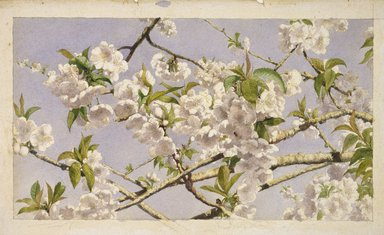 John William Hill (American, 1812-1879). <em>Apple Blossoms</em>, ca. 1874. Watercolor over graphite on wove paper, Image: 7 1/2 × 13 3/8 in. (19.1 × 34 cm). Brooklyn Museum, Designated Purchase Fund, 74.170 (Photo: Brooklyn Museum, 74.170_SL1.jpg)