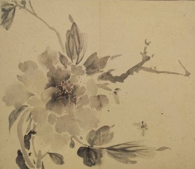 <em>Peony and Bumblebee</em>, 19th century. Ink and light color on paper, 11 1/2 x 13 1/4 in.  (29.2 x 33.7 cm). Brooklyn Museum, Designated Purchase Fund, 75.125.9 (Photo: Brooklyn Museum, 75.125.9.jpg)