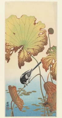 Ohara Koson (Shoson) (Japanese, 1877-1945). <em>Wagtail and Lotus</em>, 1930-1939. Color woodblock print on paper, 14 13/16 x 6 7/16 in. (37.7 x 16.4 cm). Brooklyn Museum, Gift of Mr. and Mrs. Peter P. Pessutti, 77.264.4 (Photo: Brooklyn Museum, 77.264.4_IMLS_PS3.jpg)