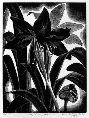Grace Arnold Albee (American, 1890-1995). <em>My Amaryllis</em>, 1978. Wood engraving on vellum, Image: 7 3/4 x 5 7/8 in. (19.7 x 14.9 cm). Brooklyn Museum, Designated Purchase Fund, 78.230.2. © artist or artist's estate (Photo: Brooklyn Museum, 78.230.2_bw.jpg)