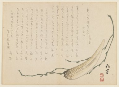 Ryosai (Japanese). <em>Seaweed and Daikon</em>, ca. 1850. Color woodblock print on paper, 7 1/8 x 9 3/4 in. (18.1 x 24.8 cm). Brooklyn Museum, Gift of Dr. and Mrs. Stanley L. Wallace, 79.190.7 (Photo: Brooklyn Museum, 79.190.7_IMLS_PS3.jpg)