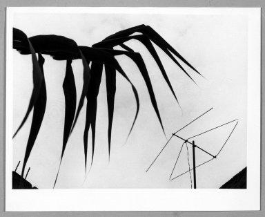 Manuel Álvarez Bravo (Mexican, 1902-2002). <em>Carrizo y Tele</em>, 1976. Gelatin silver photograph, image: 6 7/8 x 9 1/8 in. (17.5 x 23.2 cm). Brooklyn Museum, Gift of William Berley, 79.294.1. © artist or artist's estate (Photo: Brooklyn Museum, 79.294.1_bw.jpg)