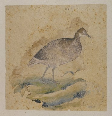 Indian. <em>A Bird, Perhaps a Grouse</em>, ca. 1760. Ink and color on paper, sheet: 5 3/4 x 5 1/2 in.  (14.6 x 14.0 cm). Brooklyn Museum, Gift of Marilyn W. Grounds, 80.261.38 (Photo: Brooklyn Museum, 80.261.38_PS4.jpg)