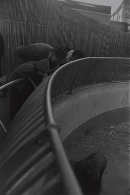 Garry Winogrand (American, 1928-1984). <em>New York City</em>, 1964, printed 1978. Gelatin silver photograph, Sheet: 13 7/8 x 10 15/16 in. (35.2 x 27.8 cm). Brooklyn Museum, Gift of Donald T. Johnson, 81.260.20. © artist or artist's estate (Photo: , 81.260.20_PS9.jpg)