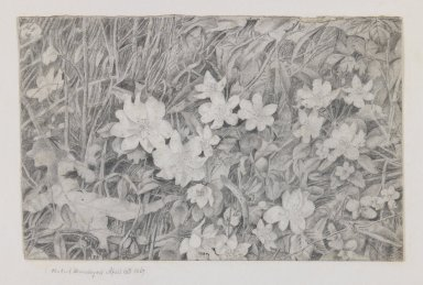 Robert Brandegee (American, 1849-1922). <em>Anemones (Grasses and Flowers)</em>, April 15, 1867. Graphite on cream, moderately thick, smooth wove paper mounted to paper., Sheet (drawing): 4 1/4 x 6 5/8 in. (10.8 x 16.8 cm). Brooklyn Museum, Charles Stewart Smith Memorial Fund, 82.134.1 (Photo: Brooklyn Museum, 82.134.1_IMLS_PS3.jpg)