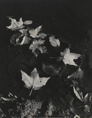 Consuelo Kanaga (American, 1894-1978). <em>[Untitled] (Leaves Floating in Water)</em>. Gelatin silver photograph, Flush Mounted: 10 1/2 x 13 1/4 in. (26.7 x 33.7 cm). Brooklyn Museum, Gift of Wallace B. Putnam from the Estate of Consuelo Kanaga, 82.65.112 (Photo: Brooklyn Museum, 82.65.112_PS2.jpg)