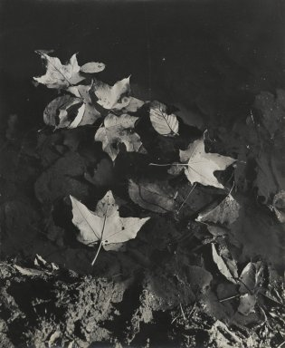 Consuelo Kanaga (American, 1894-1978). <em>[Untitled] (Leaves Floating in Water)</em>. Gelatin silver photograph, 10 5/8 x 13 in. (27 x 33 cm). Brooklyn Museum, Gift of Wallace B. Putnam from the Estate of Consuelo Kanaga, 82.65.113 (Photo: Brooklyn Museum, 82.65.113_PS2.jpg)