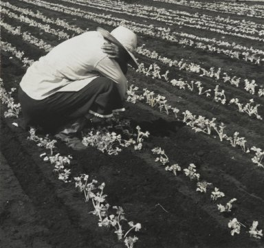 Consuelo Kanaga (American, 1894-1978). <em>[Untitled] (Field Worker)</em>, 1950. Gelatin silver photograph, 4 1/4 x 4 1/2 in. (10.8 x 11.4 cm). Brooklyn Museum, Gift of Wallace B. Putnam from the Estate of Consuelo Kanaga, 82.65.137 (Photo: Brooklyn Museum, 82.65.137_PS2.jpg)