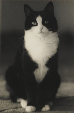 Consuelo Kanaga (American, 1894-1978). <em>[Untitled] (Cat)</em>. Gelatin silver photograph, 4 3/8 x 2 7/8 in. (11.1 x 7.3 cm). Brooklyn Museum, Gift of Wallace B. Putnam from the Estate of Consuelo Kanaga, 82.65.138 (Photo: Brooklyn Museum, 82.65.138_PS2.jpg)