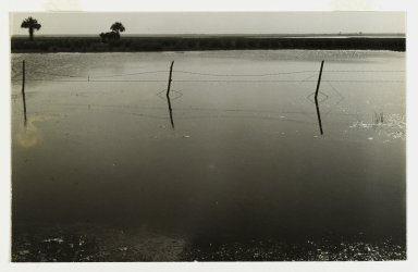 Consuelo Kanaga (American, 1894-1978). <em>[Untitled] (Barbed Wire Fence, Florida)</em>, 1950. Toned gelatin silver photograph, 4 3/4 x 7 1/2 in. (12.1 x 19.1 cm). Brooklyn Museum, Gift of Wallace B. Putnam from the Estate of Consuelo Kanaga, 82.65.142 (Photo: Brooklyn Museum, 82.65.142_PS2.jpg)