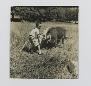 Consuelo Kanaga (American, 1894-1978). <em>[Untitled] (Boy Feeding Cow)</em>. Gelatin silver photograph, 2 1/4 x 2 1/4 in. (5.7 x 5.7 cm). Brooklyn Museum, Gift of Wallace B. Putnam from the Estate of Consuelo Kanaga, 82.65.147 (Photo: Brooklyn Museum, 82.65.147_PS2.jpg)