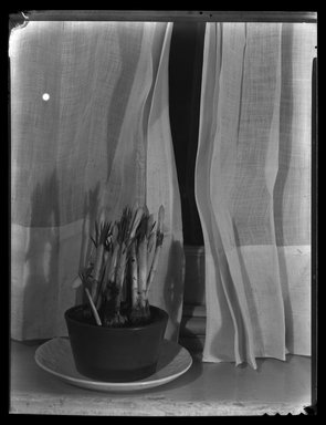 Consuelo Kanaga (American, 1894-1978). <em>[Untitled]</em>. Cellulose nitrate negative, 8 7/8 x 6 7/8 in. (22.5 x 17.5 cm). Brooklyn Museum, Gift of Wallace B. Putnam from the Estate of Consuelo Kanaga, 82.65.1990 (Photo: Brooklyn Museum, 82.65.1990.jpg)
