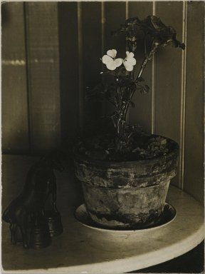 Consuelo Kanaga (American, 1894-1978). <em>[Untitled] (Potted Plant)</em>. Gelatin silver photograph, 3 7/8 x 3 in. (9.8 x 7.6 cm). Brooklyn Museum, Gift of Wallace B. Putnam from the Estate of Consuelo Kanaga, 82.65.2235 (Photo: Brooklyn Museum, 82.65.2235_PS2.jpg)