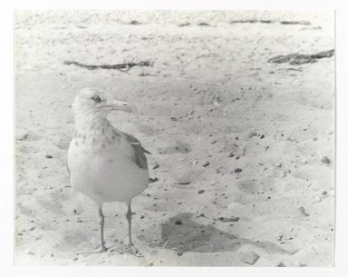 Consuelo Kanaga (American, 1894-1978). <em>[Untitled] (Bird)</em>. Gelatin silver photograph, 7 1/2 x 9 3/8 in. (19.1 x 23.8 cm). Brooklyn Museum, Gift of Wallace B. Putnam from the Estate of Consuelo Kanaga, 82.65.226 (Photo: Brooklyn Museum, 82.65.226_PS2.jpg)