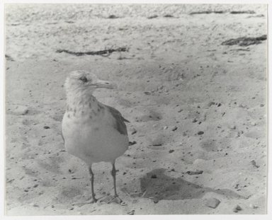 Consuelo Kanaga (American, 1894-1978). <em>[Untitled] (Bird)</em>. Gelatin silver photograph, 7 5/8 x 9 1/2 in. (19.4 x 24.1 cm). Brooklyn Museum, Gift of Wallace B. Putnam from the Estate of Consuelo Kanaga, 82.65.2652 (Photo: Brooklyn Museum, 82.65.2652_PS2.jpg)