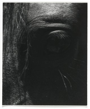 Consuelo Kanaga (American, 1894-1978). <em>[Untitled] (Horse's Eye)</em>. Gelatin silver photograph, 4 x 3 1/2 in. (10.2 x 8.9 cm). Brooklyn Museum, Gift of Wallace B. Putnam from the Estate of Consuelo Kanaga, 82.65.275 (Photo: Brooklyn Museum, 82.65.275_PS2.jpg)