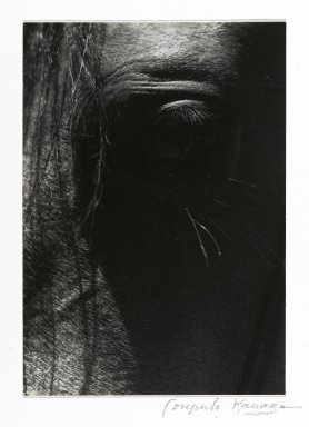 Consuelo Kanaga (American, 1894-1978). <em>[Untitled] (Horse's Eye)</em>. Gelatin silver photograph, Image: 5 1/2 x 3 7/8 in. (14 x 9.8 cm). Brooklyn Museum, Gift of Wallace B. Putnam from the Estate of Consuelo Kanaga, 82.65.27 (Photo: Brooklyn Museum, 82.65.27_PS2.jpg)