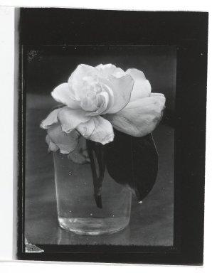 Consuelo Kanaga (American, 1894-1978). <em>[Untitled] (Gardenia in Glass)</em>. Gelatin silver photograph, Other: 5 x 4 in. (12.7 x 10.2 cm). Brooklyn Museum, Gift of Wallace B. Putnam from the Estate of Consuelo Kanaga, 82.65.327 (Photo: Brooklyn Museum, 82.65.327_PS2.jpg)