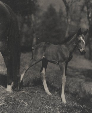 Consuelo Kanaga (American, 1894-1978). <em>[Untitled] (Foal)</em>, 1950s. Toned gelatin silver photograph, 9 1/4 x 7 1/2 in. (23.5 x 19.1 cm). Brooklyn Museum, Gift of Wallace B. Putnam from the Estate of Consuelo Kanaga, 82.65.32 (Photo: Brooklyn Museum, 82.65.32_PS2.jpg)