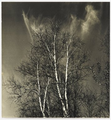 Consuelo Kanaga (American, 1894-1978). <em>[Untitled] (Birch Trees)</em>. Gelatin silver photograph, 8 1/2 x 7 7/8 in. (21.6 x 20 cm). Brooklyn Museum, Gift of Wallace B. Putnam from the Estate of Consuelo Kanaga, 82.65.354 (Photo: Brooklyn Museum, 82.65.354_PS2.jpg)