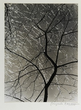 Consuelo Kanaga (American, 1894-1978). <em>[Untitled] (Ice Storm)</em>. Toned gelatin silver photograph, 9 5/8 x 7 1/8 in. (24.4 x 18.1 cm). Brooklyn Museum, Gift of Wallace B. Putnam from the Estate of Consuelo Kanaga, 82.65.382 (Photo: Brooklyn Museum, 82.65.382_PS2.jpg)